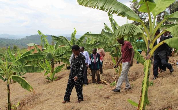 Burundi – Landbrugsaktiviteter