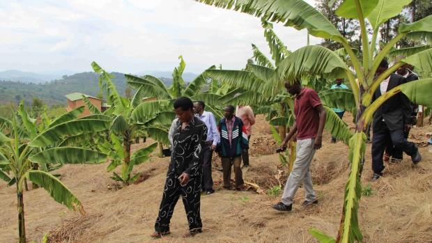 Burundi - Landbrugsaktiviteter
